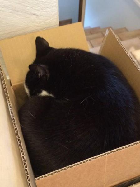 Katzen (1)