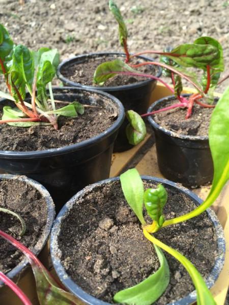 Garten (7)