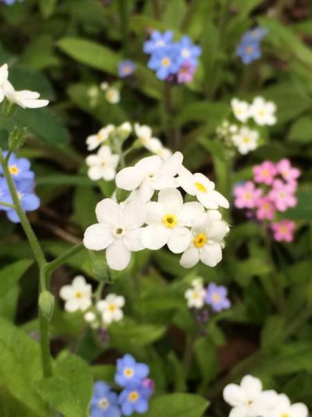Garten impression (1)