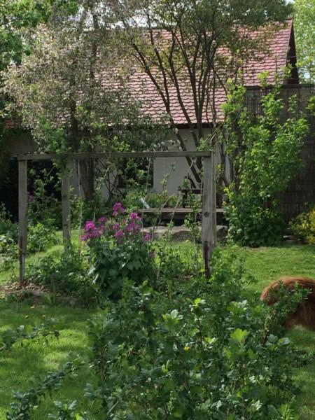 Garten impression (10)