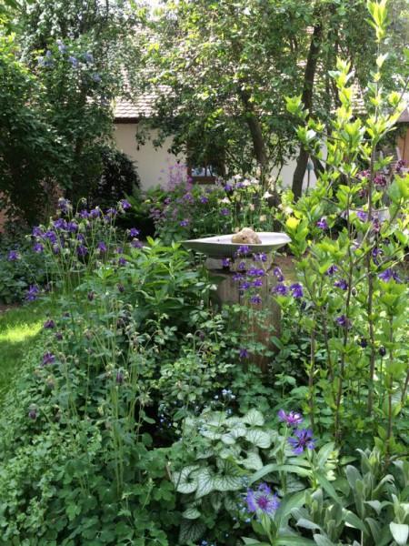 Gartenbilder (10)