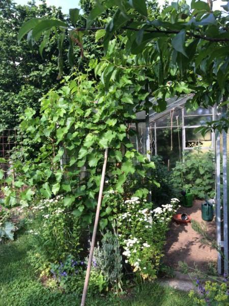 Gartenbilder (11)