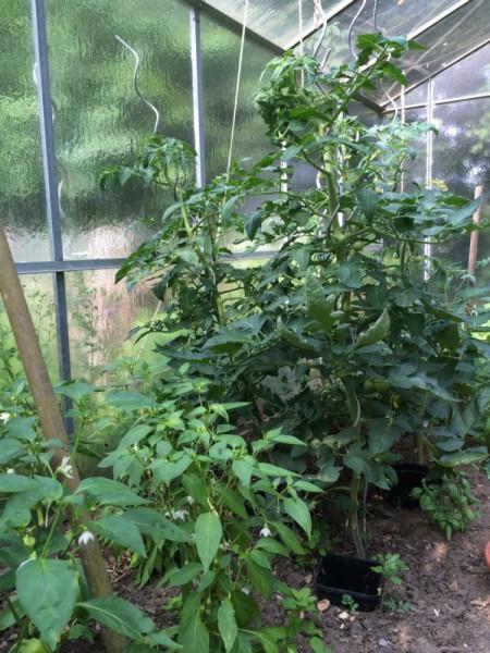Gartenbilder (12)