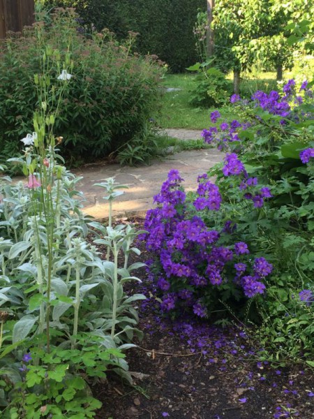 Gartenbilder (5)