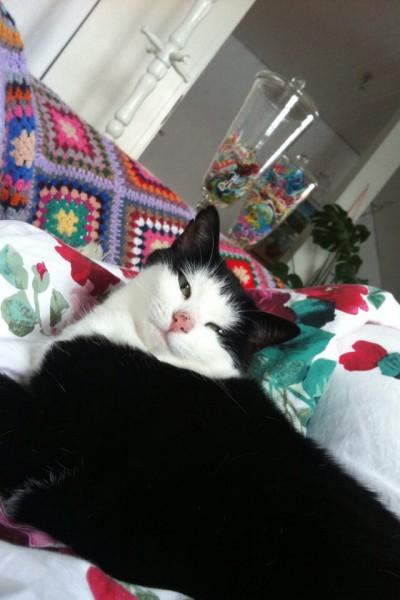 Katzenbilder (4)