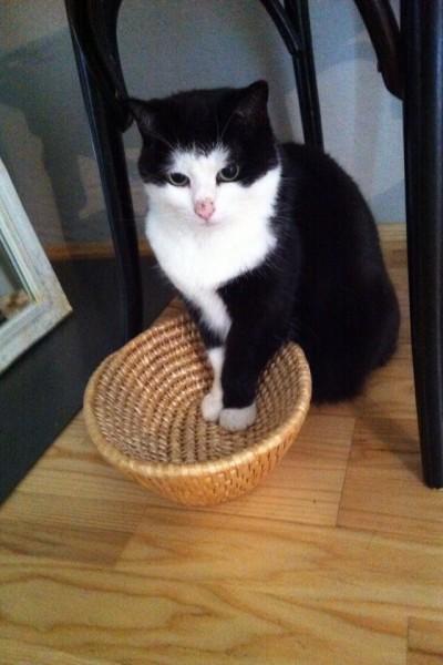Katzenbilder (5)