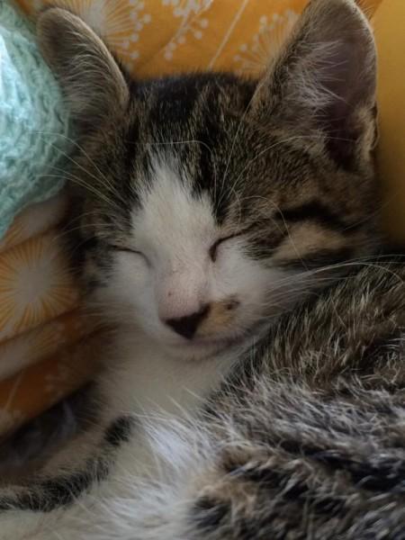 Katze (5)