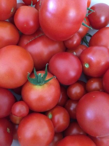 Tomaten trocknen (1)