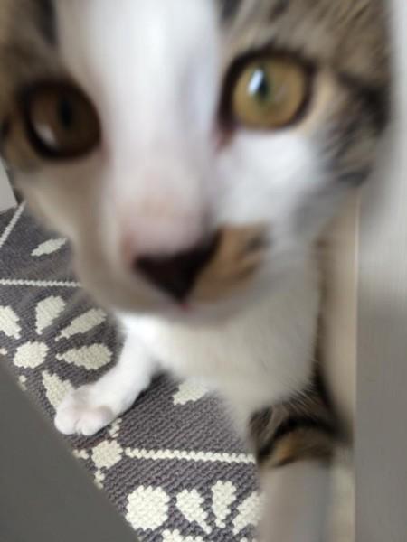 Katze kommt (1)