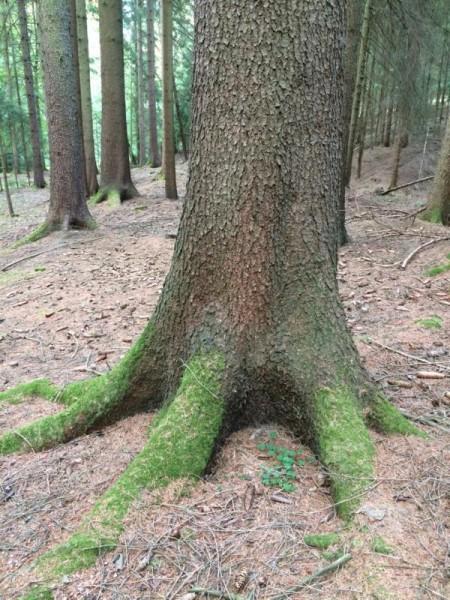 Wald (7)