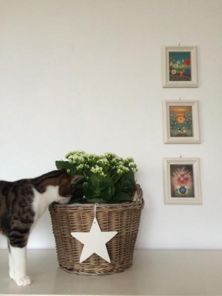Katze (6)