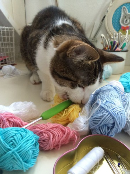 Katze Wolle (1)