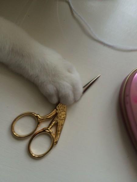 Katze Wolle (2)