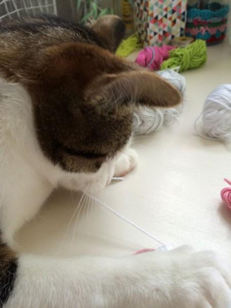 Katze Wolle (3)