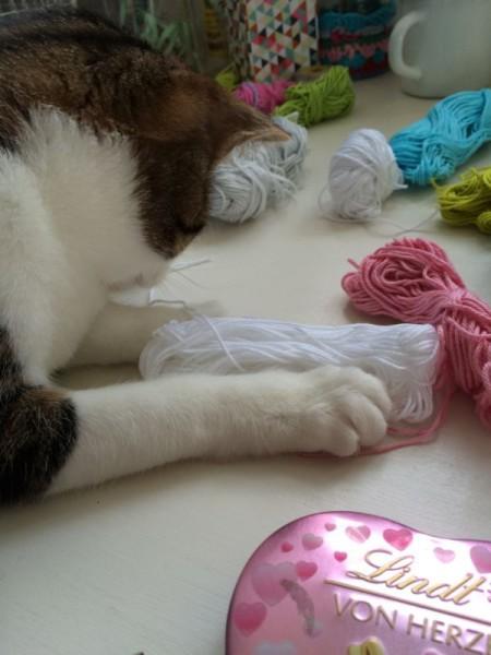 Katze Wolle (4)