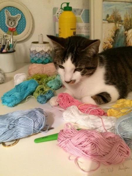 Katze Wolle (5)