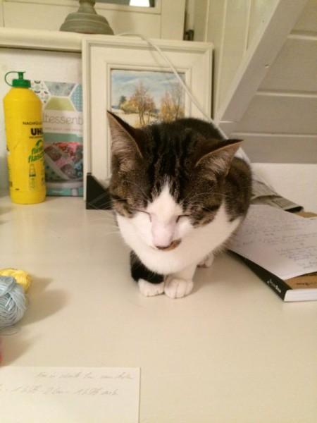 Katze Wolle (6)