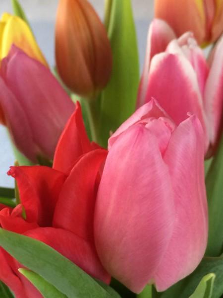 Tulpen (4)