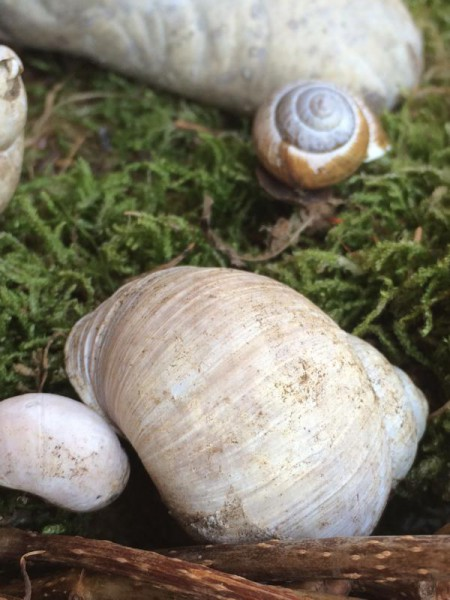 Gartendeko (1)