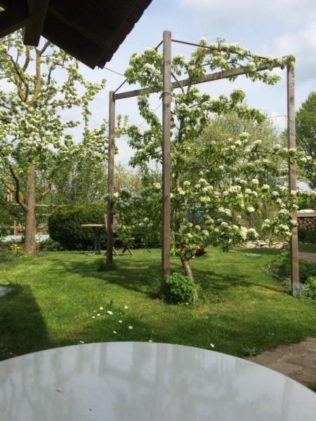 Garten impression (3)