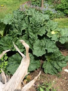Garten impression (7)
