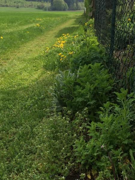 Garten impression (8)