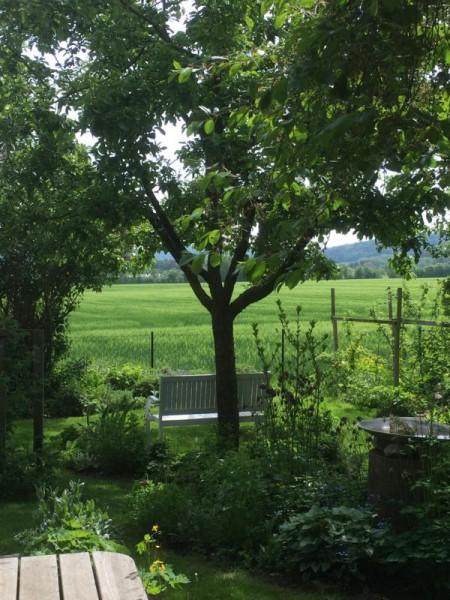 Gartenbilder (1)