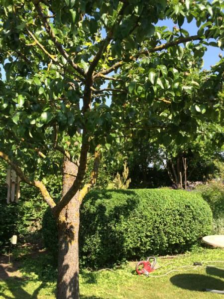 Gartenbilder (4)