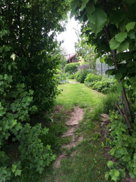 Gartenbilder (6)
