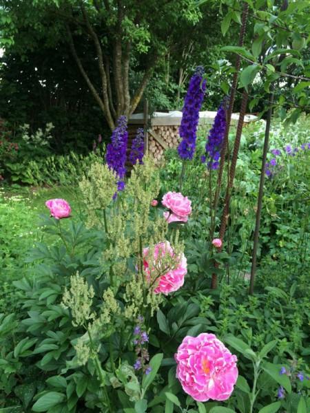 Gartenbilder (13)
