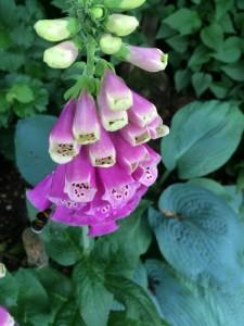 Gartenbilder (14)