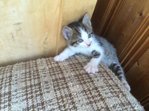 Katzenbilder (1)