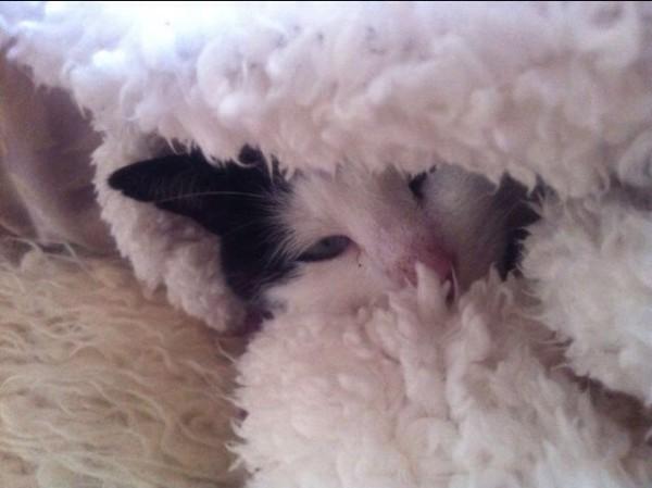 Katzenbilder (2)