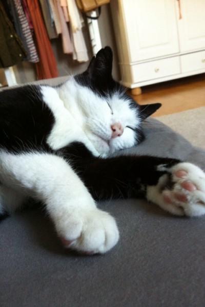 Katzenbilder (3)