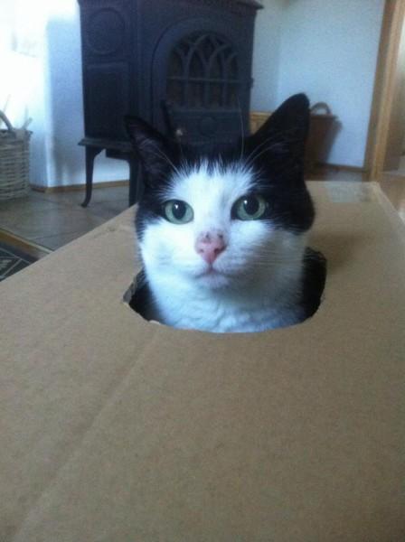 Katzenbilder (6)