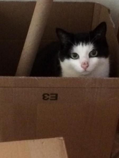 Katzenbilder (7)