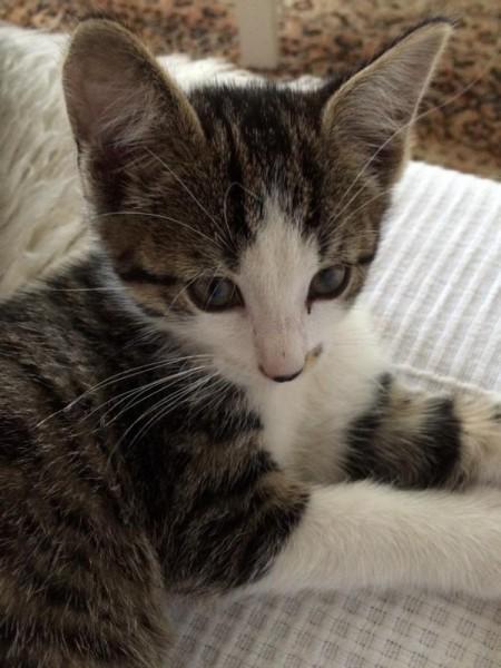 Katze (3)