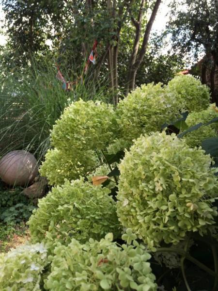 Garten (5)