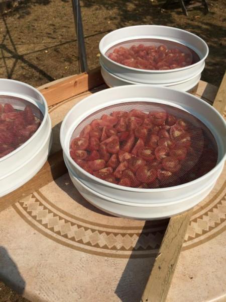 Tomaten trocknen (2)