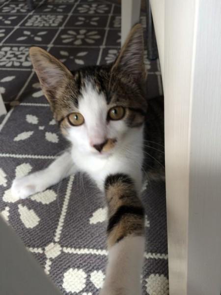 Katze kommt (2)