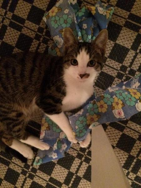 Katze (1)
