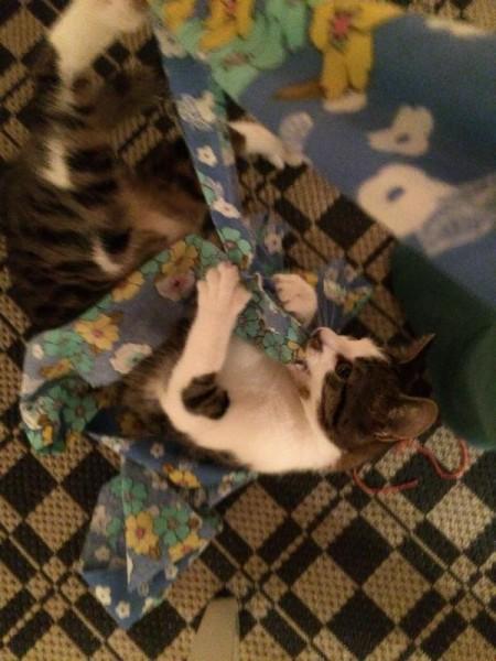 Katze (4)