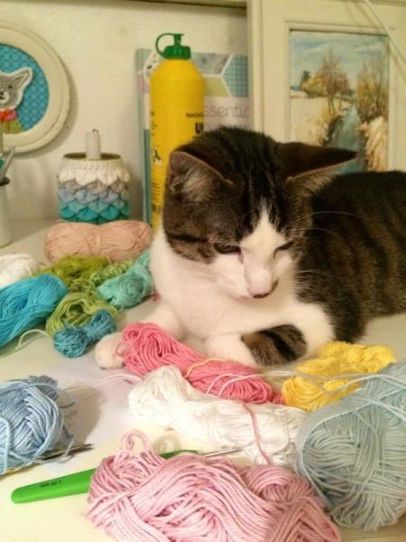 Katze Wolle (7)