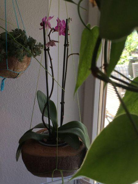 kokosnuss (2)