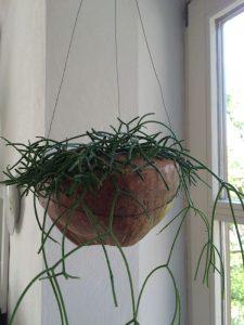 kokosnuss (6)