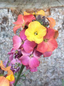 gartenblumen (1)