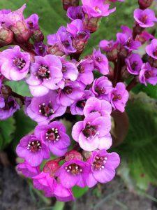 gartenblumen (4)